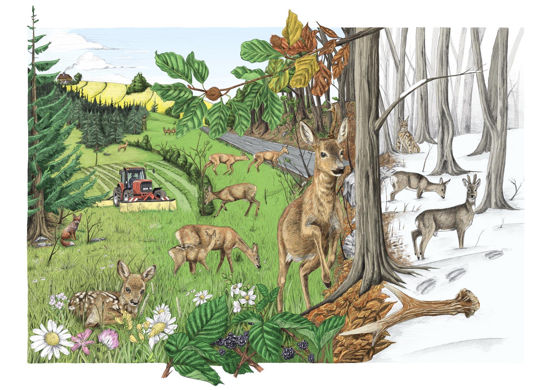 Tier des Jahres 2019 — Illustration